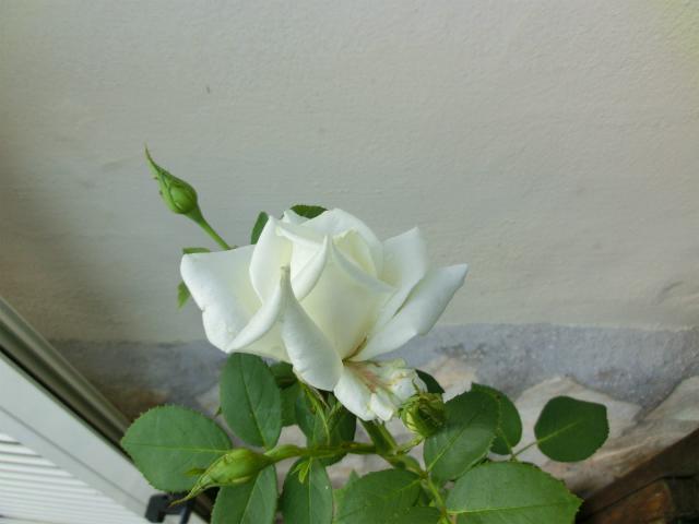 ホワイトメモリー2